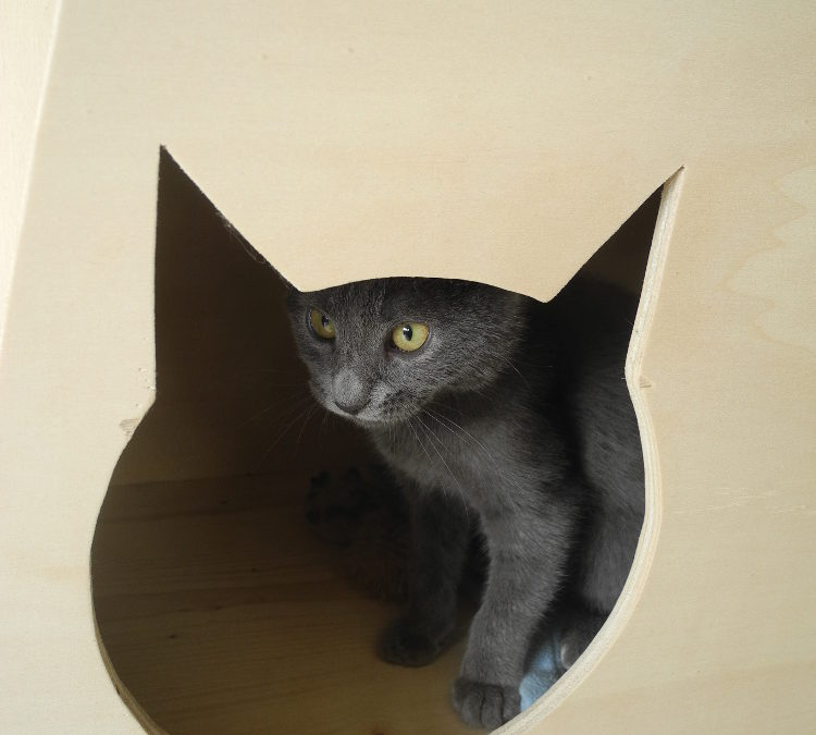 Une cabane à chat